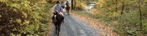 Pleasure riders, Fall 2014